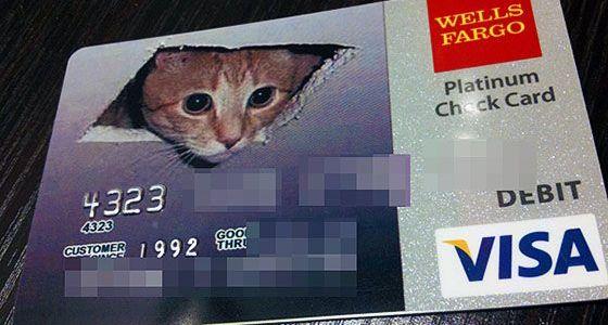 cat-in-ceiling-credit-card