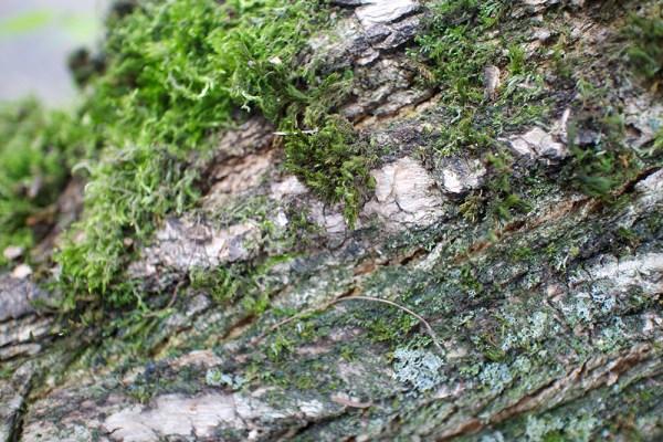 05 mossy tree
