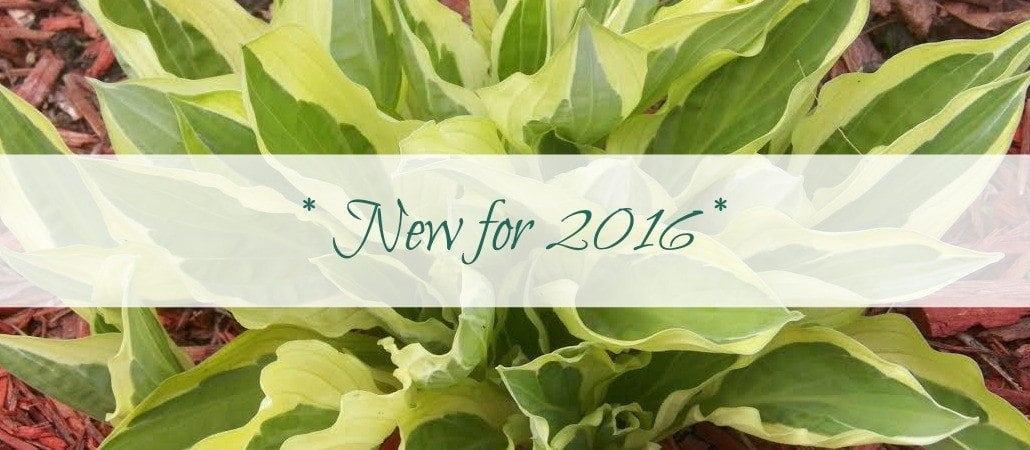 newfor2016