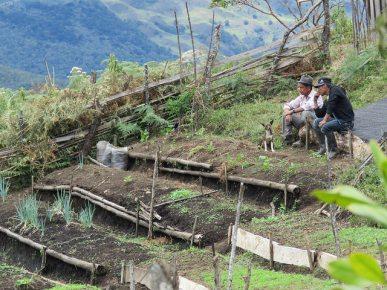[Foto: Huertas ancestrales renacen. Comité Internacional de la Cruz Roja vía Flickr]