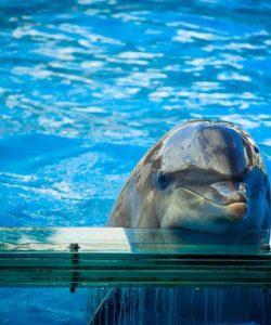 Delfín en zoológico en Lisboa