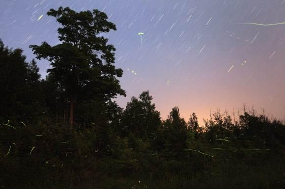 Fireflies June 30 2013 C