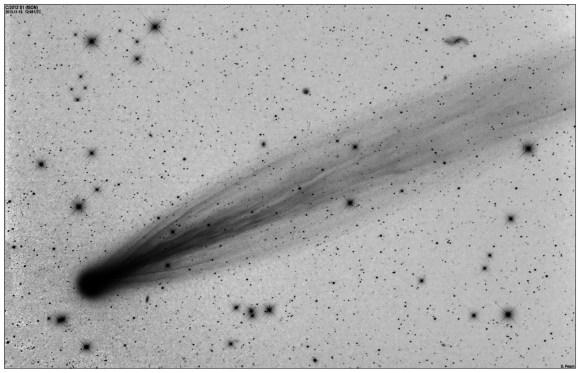 A negative image of Comet ISON on Nov. 15, 2013, 106mm F5.0 with STL-11k. LRGB. L: 5x2mins. RGB: 1x2mins. Credit and copyright: Damian Peach.