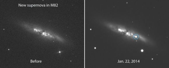 "Before and after photos of the bright galaxy M82 showing the appearance of a brand new supernova. The object is located 54"" west and 21"" south of the galaxy's center. Credit: E. Guido, N. Howes, M. Nicolini"