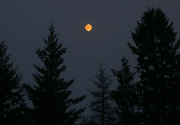 The Full Moon at 10:30 p.m. last night (Aug. 30). Even at 25° altitude, it glowed a deep, dark orange due to heavy smoke from western forest fires. Credit: Bob King