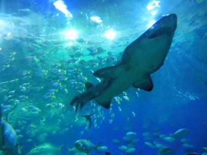 Aquarium KL