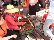 """""""Crab Market"""""""
