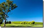 Vineyard in the Adelaide Hills, South Australia