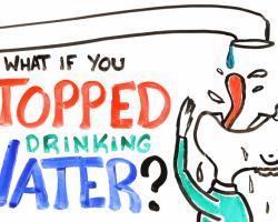 ¿Qué pasaría si dejaramos de tomar agua?