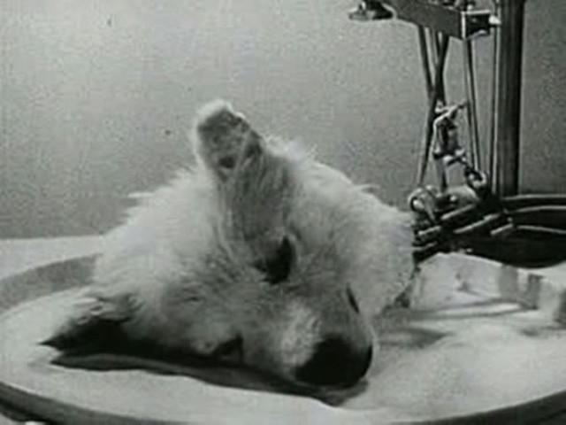 5-experimentos-absurdos-y-crueles-que-funcionaron-02