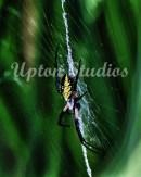 Zipperspider2(Web)
