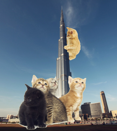tumblr m2dy9pAVQa1rsiucno1 500 Urban LOLCATS Attacks !