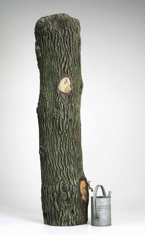 Quercus-Rain-Tree_01