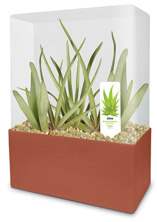ba87_grow_your_own_aloe