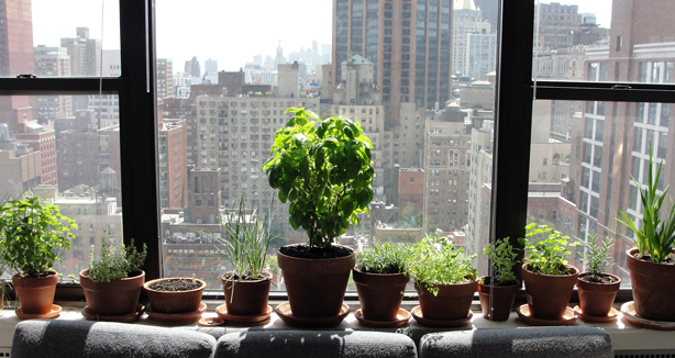 Moving outdoor gardens indoors for winter urban gardens for Indoor gardening nyc