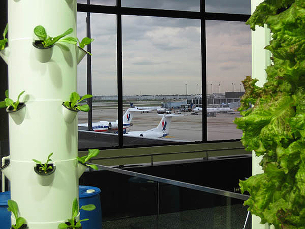 ohare-urban-garden-future-growing-urbangardensweb-planes1