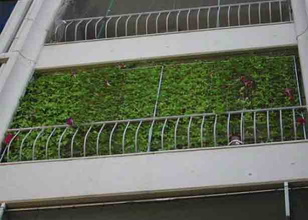 How to grow an energy saving living curtain urban gardens for Uses of balcony