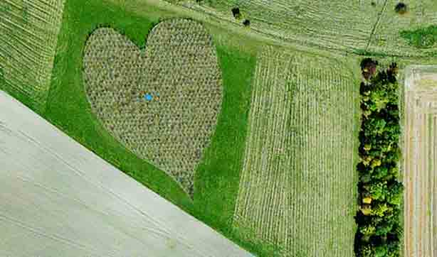 Heart-shaped-woods-in-Oare-England