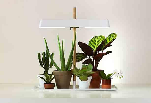 grow-light-kekkila