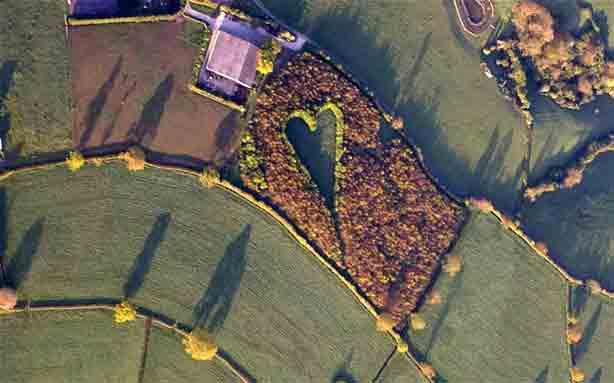heart-wood-aerial
