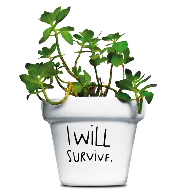 i-will-survive-plant-pot-swissmiss