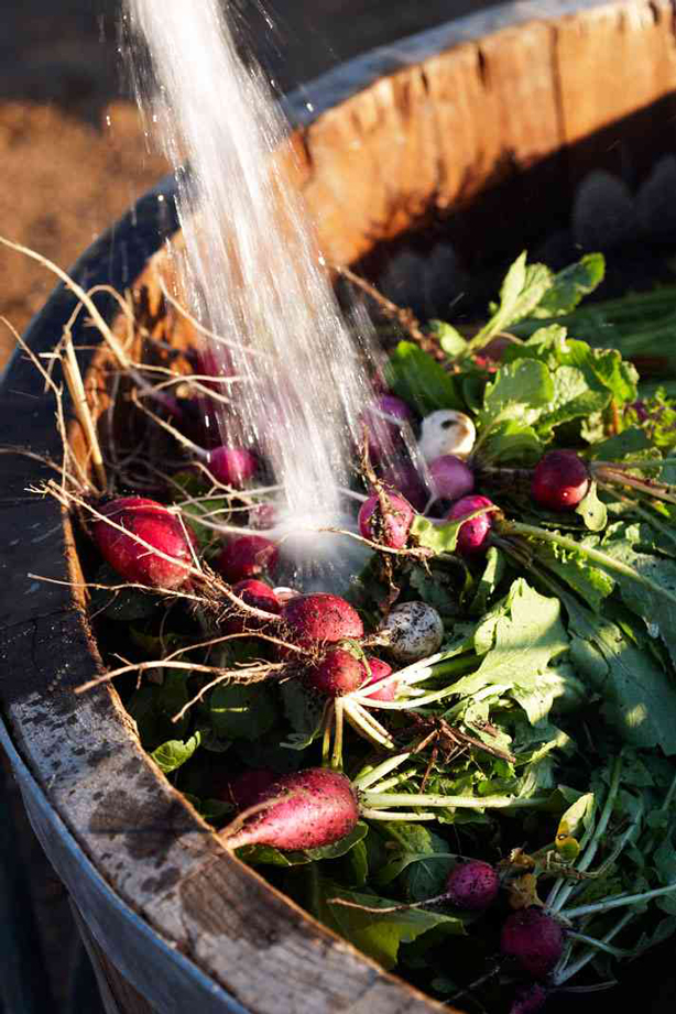 Babylonstoren-washing-veggies-urbangardensweb