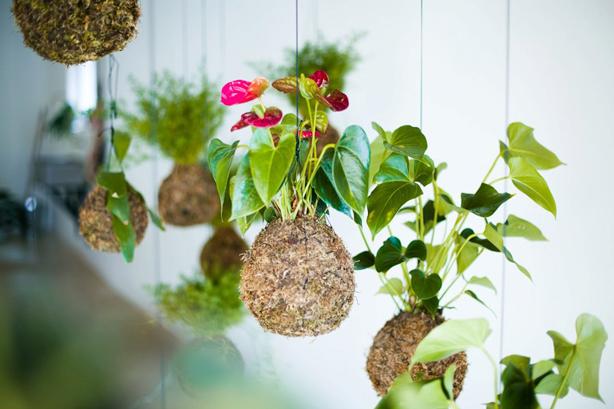 opus-studio-hanging-garden-single
