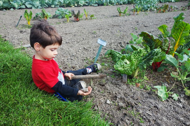 little-boy-in-garden-oif-urbangardensweb
