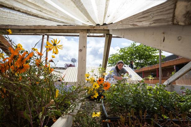 inmate-tending-flowers-in-prison-greenhouse
