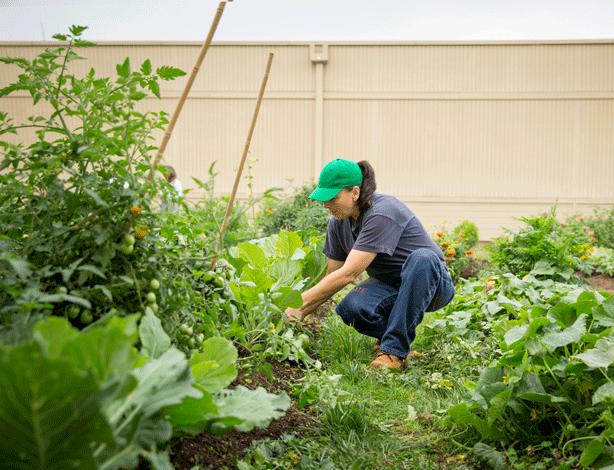 inmate-harvesting-plants-at-coffee-creek-prison-garden