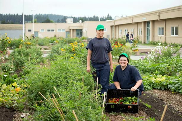 female-inmates-harvest-produce-in-Coffee-Creek-prison-garden.