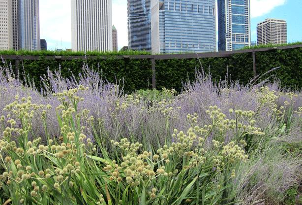 lurie-gardens-chicago-perennial-grasses-robin-plaskof-horton-urbangardensweb