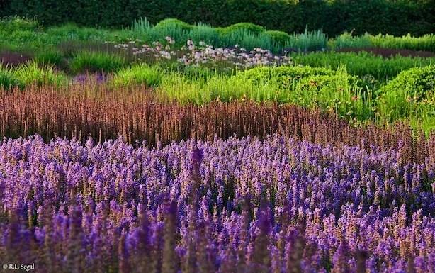 Lurie Garden Bob Segal