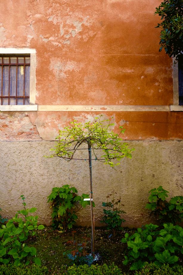 pallazzo-barnabo-terra-cotta-wall-against-foliage-614