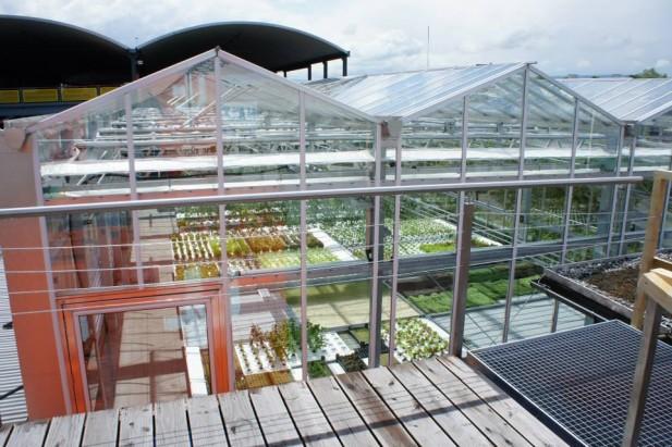 urban farm 4