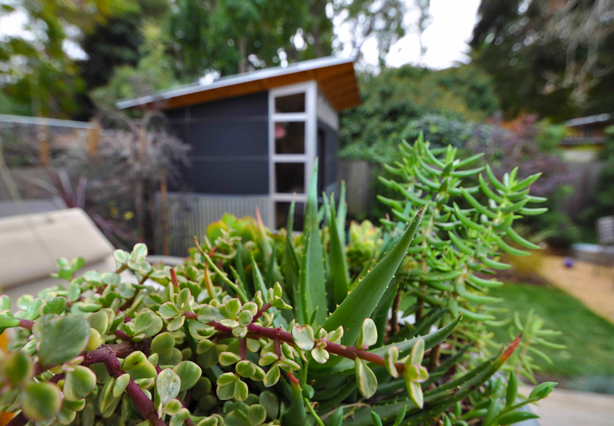 studioshed-succulents-home-office-in-background