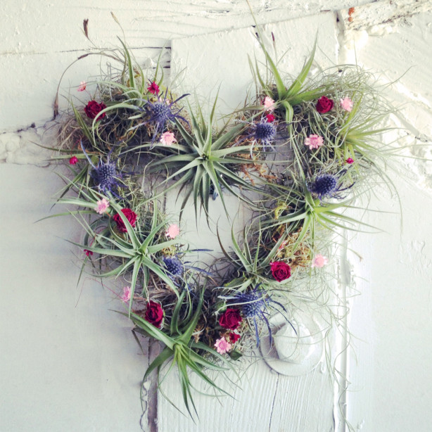 airplant hearts
