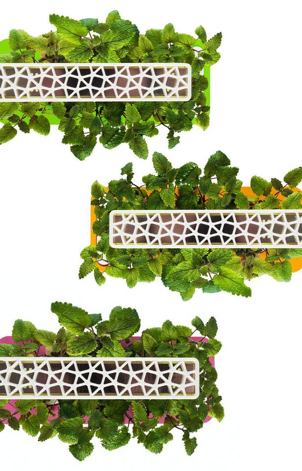 click-and-grow-smart-herb-garden-3-colors-urbangardensweb