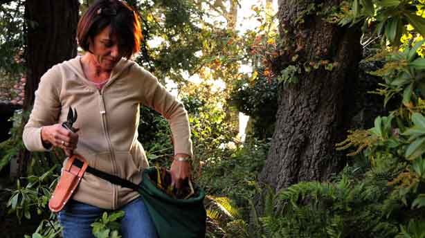 gardeners_hollow_leg_urbangardensweb