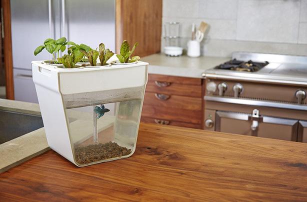 aquafarm-on-kitchen-counter