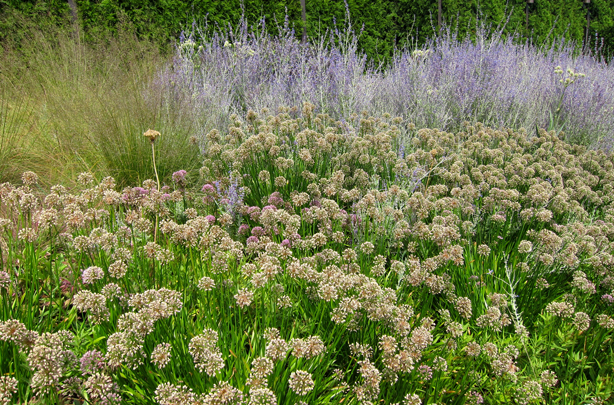 lurei-garden-alliums-grasses-urbangardensweb