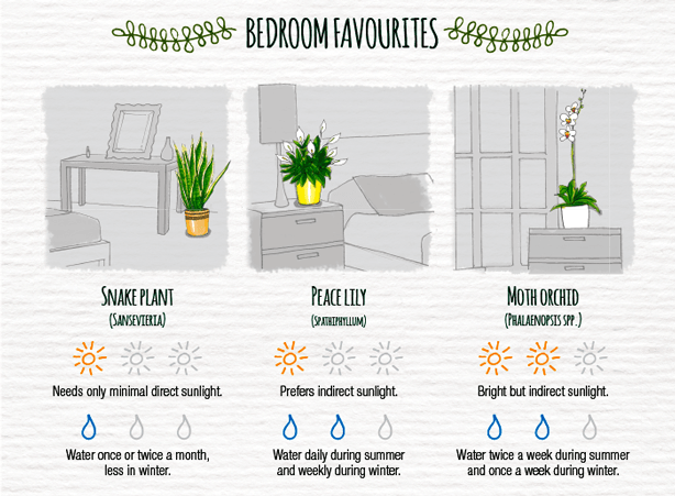 Indoor-Plant-Care-Cheatsheet-BEDROOM