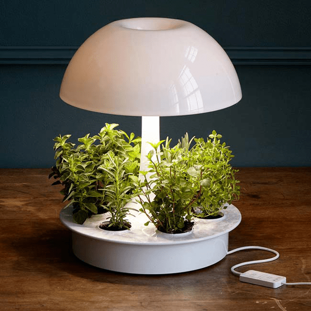 anthroplologie_table-planter-light