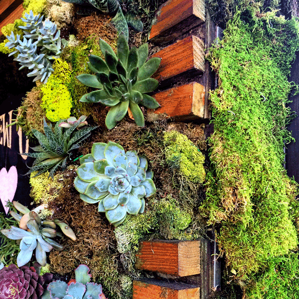 Kreations Indoor Gardening Center Guided instagram tour of the global urban garden urban gardens at kreation a natural food and juice spot on montana avenue in santa monica california the colorful vertical garden blends various succulents with mosses workwithnaturefo