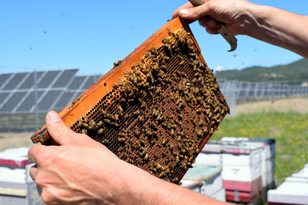 largest solar farm apiary in America with 48 hives