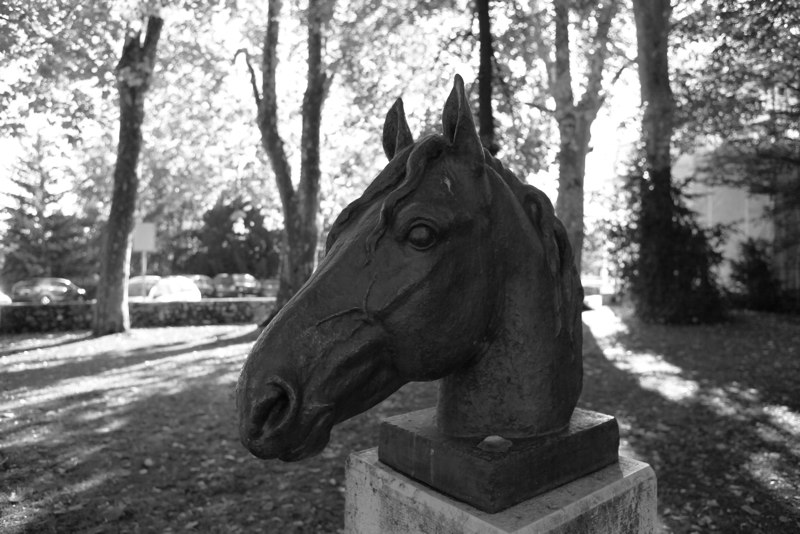 TETE DE CHEVAL LANCY 2