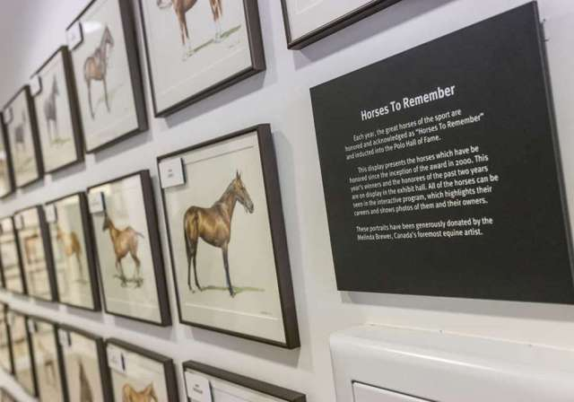 Horses to Remember Collection