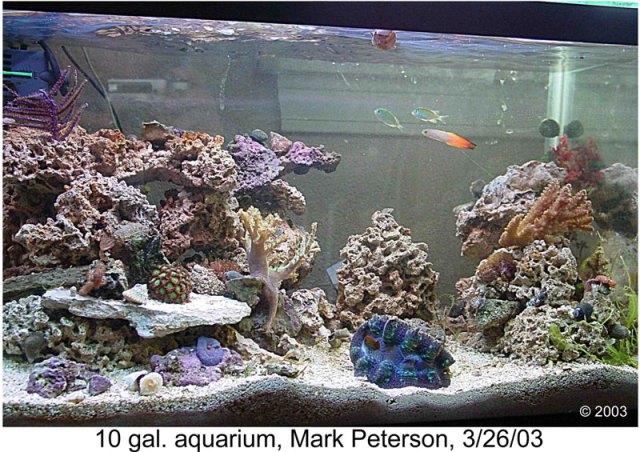 10 gallon freshwater aquarium fish Car Tuning