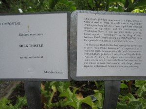 The two signs posted in the milk thistle bed.