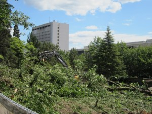 The former fruit forest area being cleared.